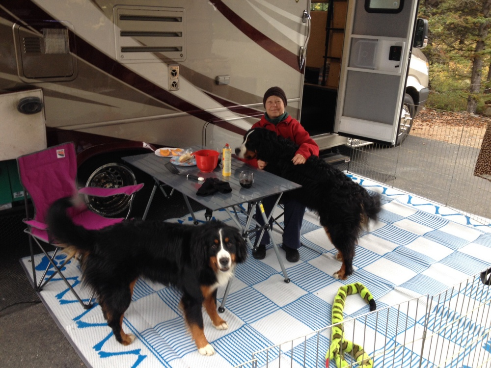 Lulu and Tuks Test Their Motorhome Prior to Departure