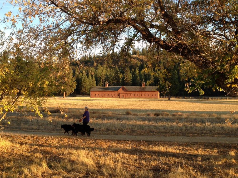Walking Around Fork Spokane
