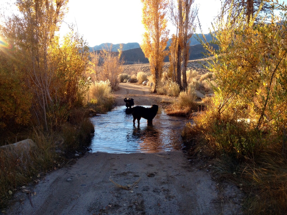 The Pups Cooling Off in Their Own Private Creek Crossing