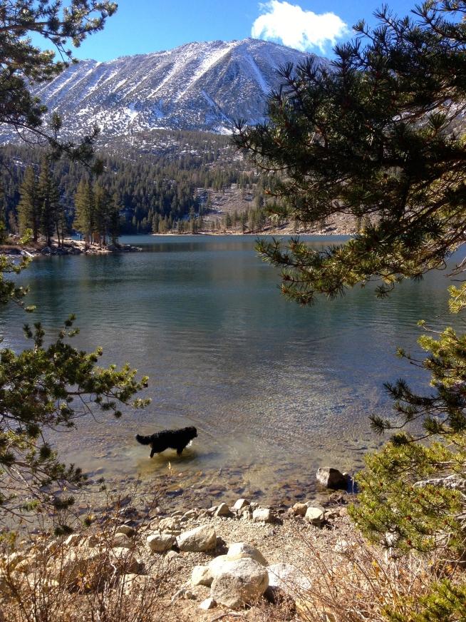Tuks Takes a Dip in Rock Creek Lake At 10,500 ft.