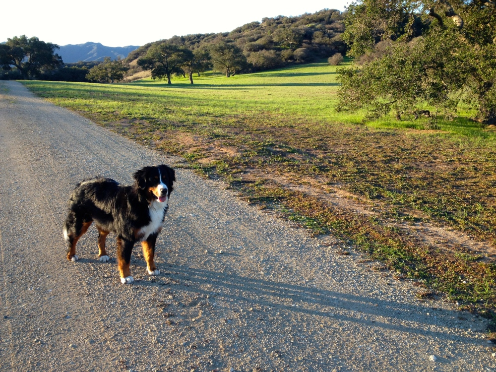 LuLu Enjoys Early morning Walk