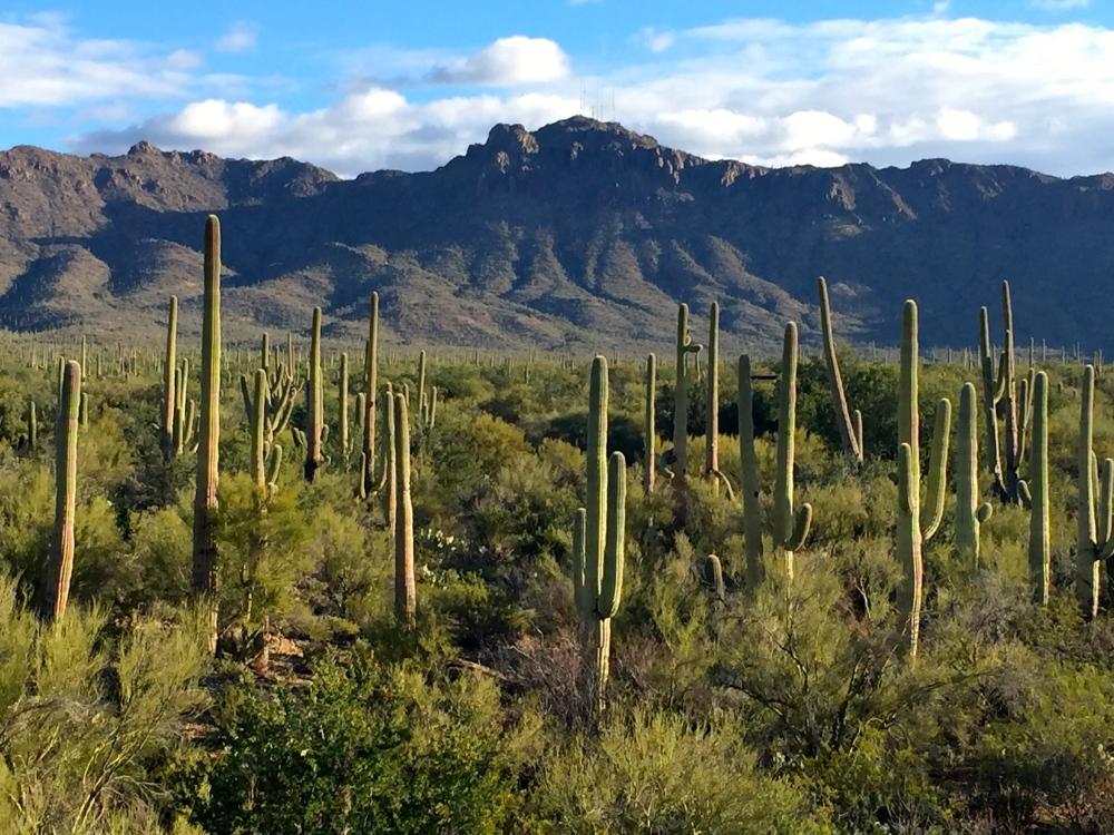 Saguaro National Momument
