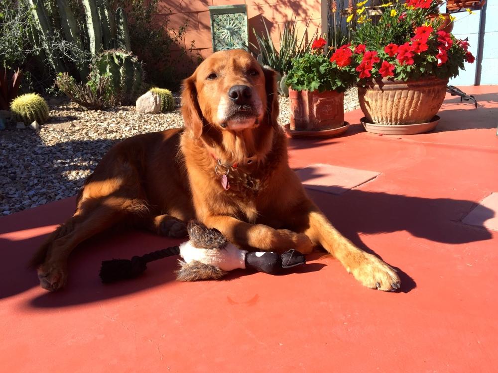 Wiley Enjoys the Morning Sun