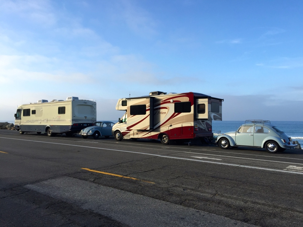 Dealing Baby Blue Bugs Camped Together on the Rincon