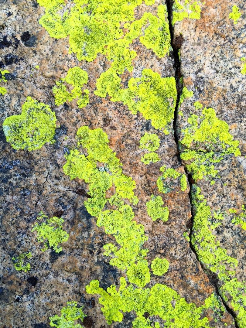 Lichens on Granite