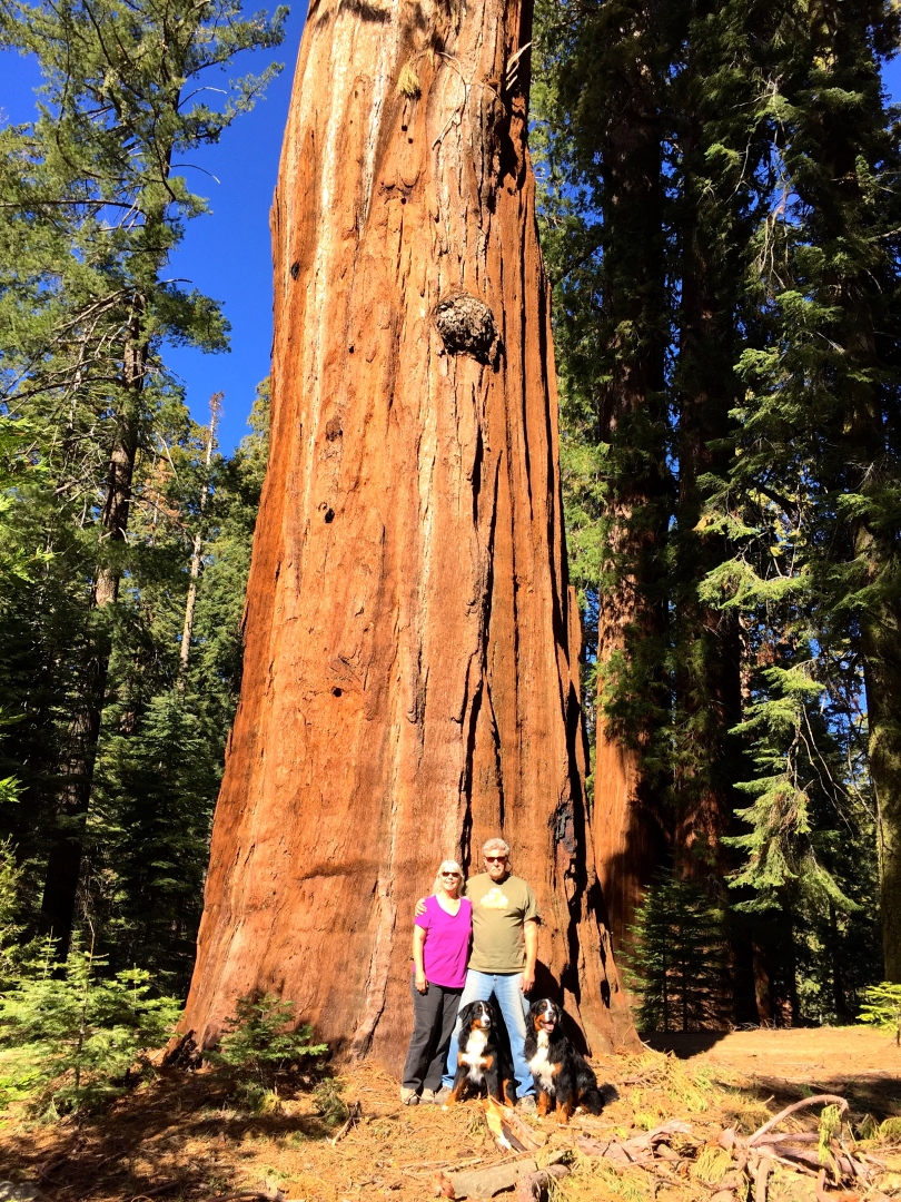 Family Portrait In Front of Sequoia