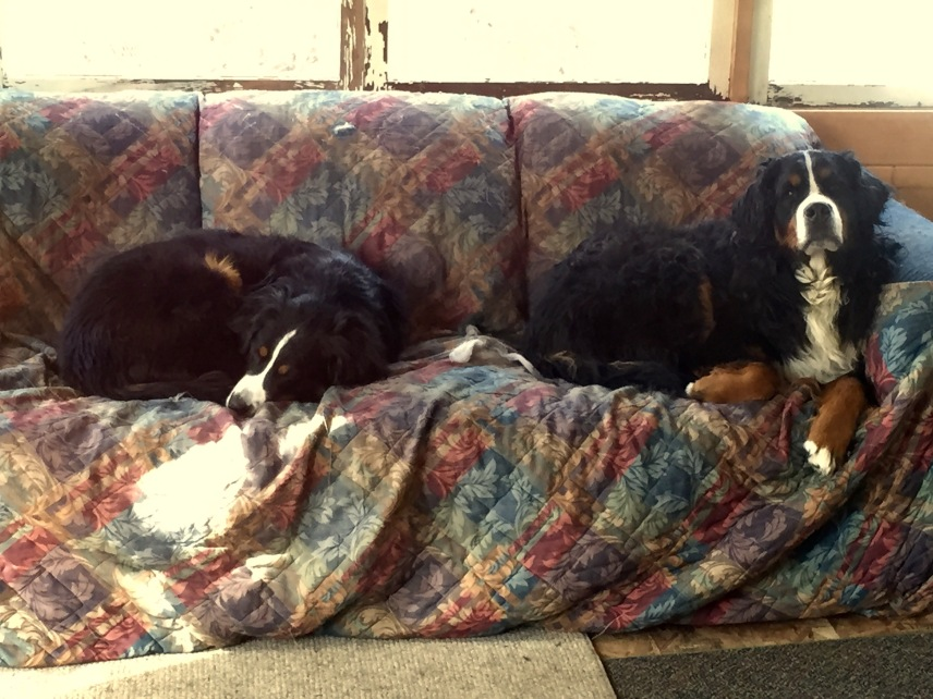 The Big Dogs Enjoy Their Couch On The Back Deck