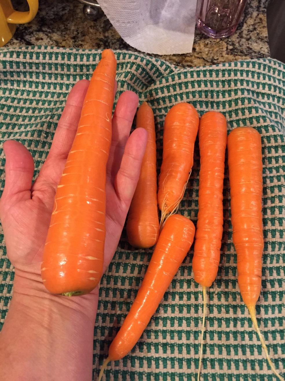 Basecamp Carrots