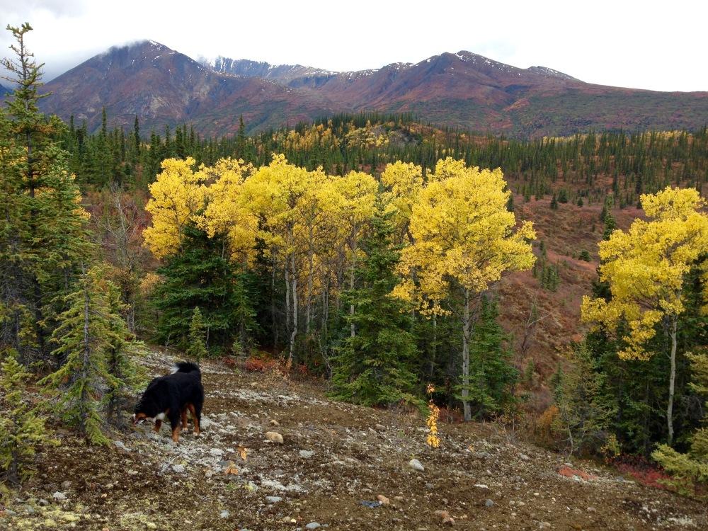 LuLu Enjoys The Fall Colors