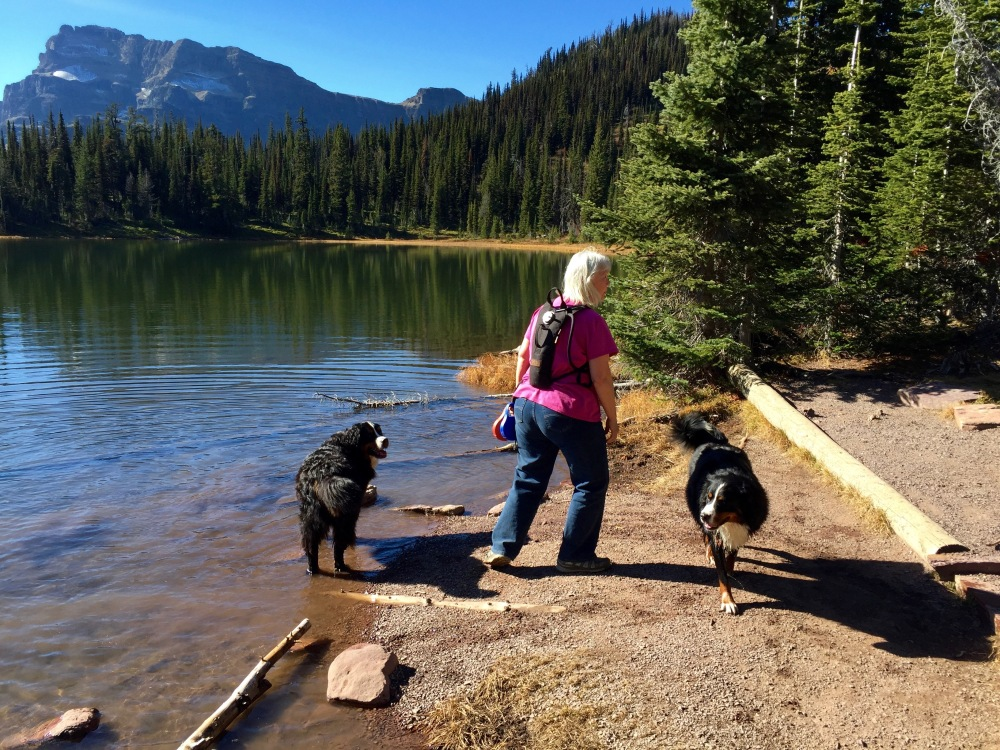 The Pups Cool Off In Summit Lake
