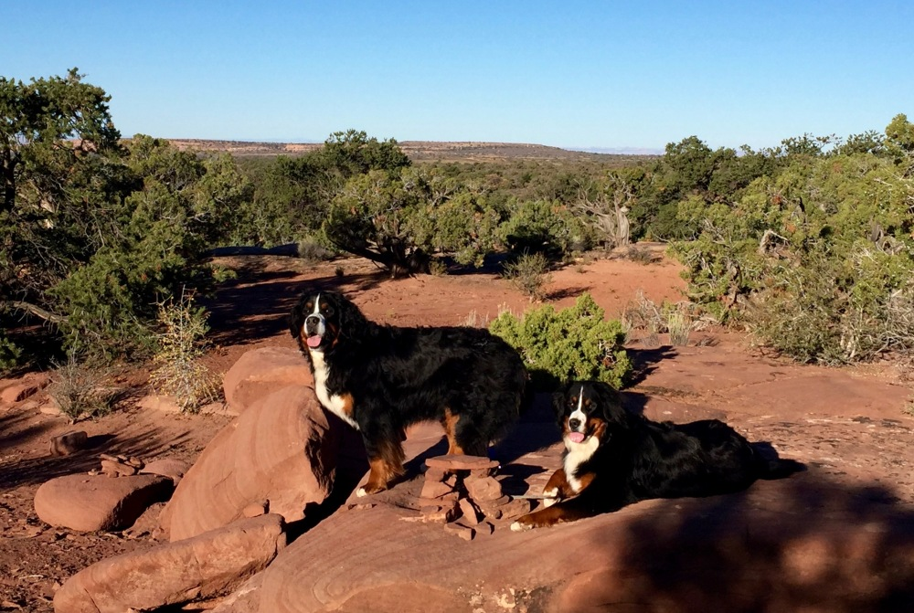 The Pups Enjoy The Red Rocks