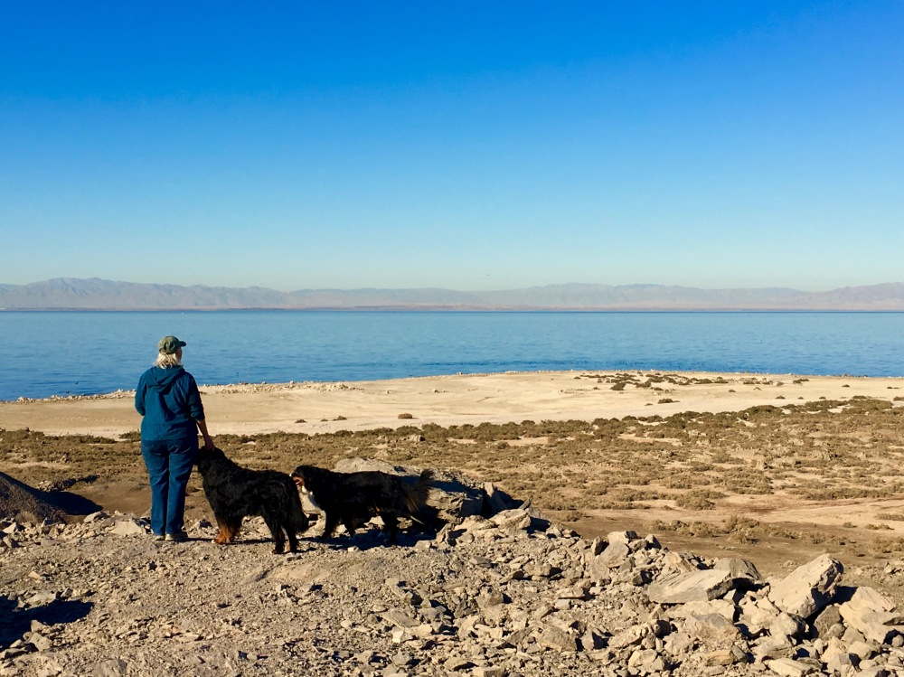 Denise And The Pups Look Out Over Morton Bay