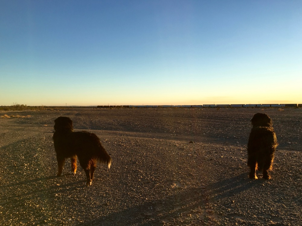The Big Dogs Watch A Passing Frieght