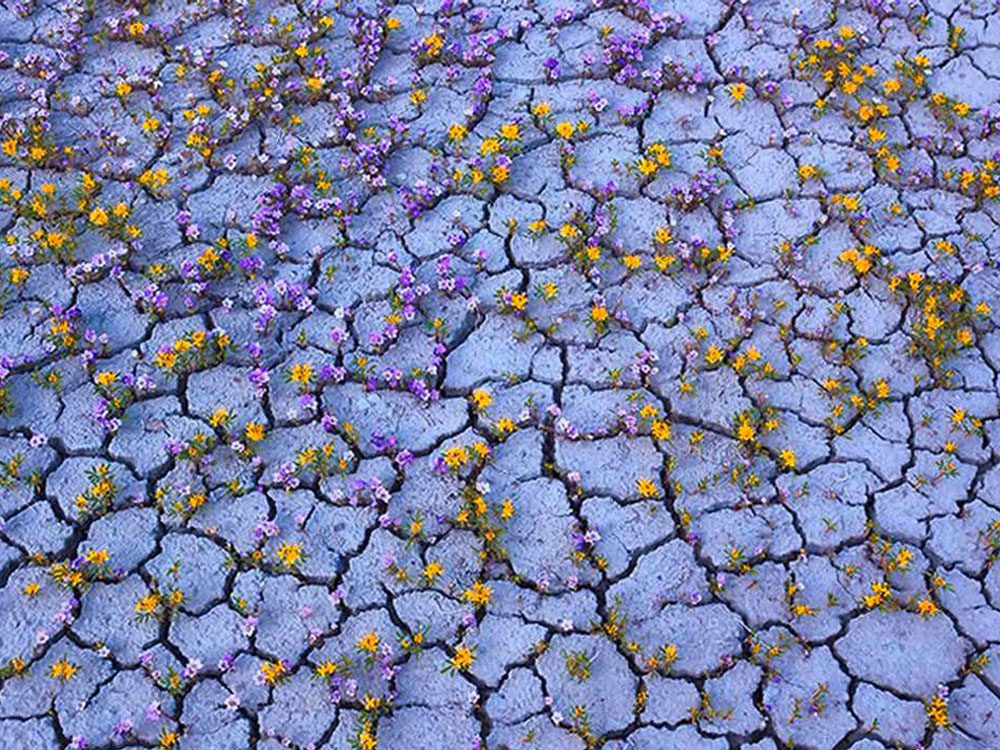 Mud Flowers Near Bad Water