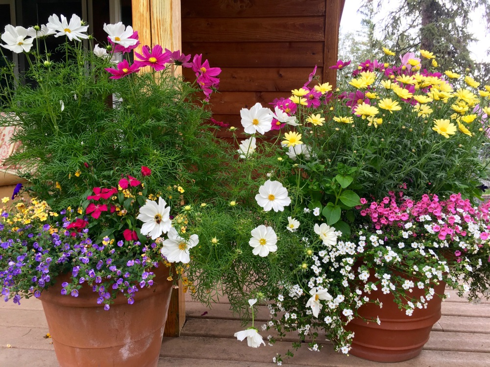 Denise's Summer Flowers