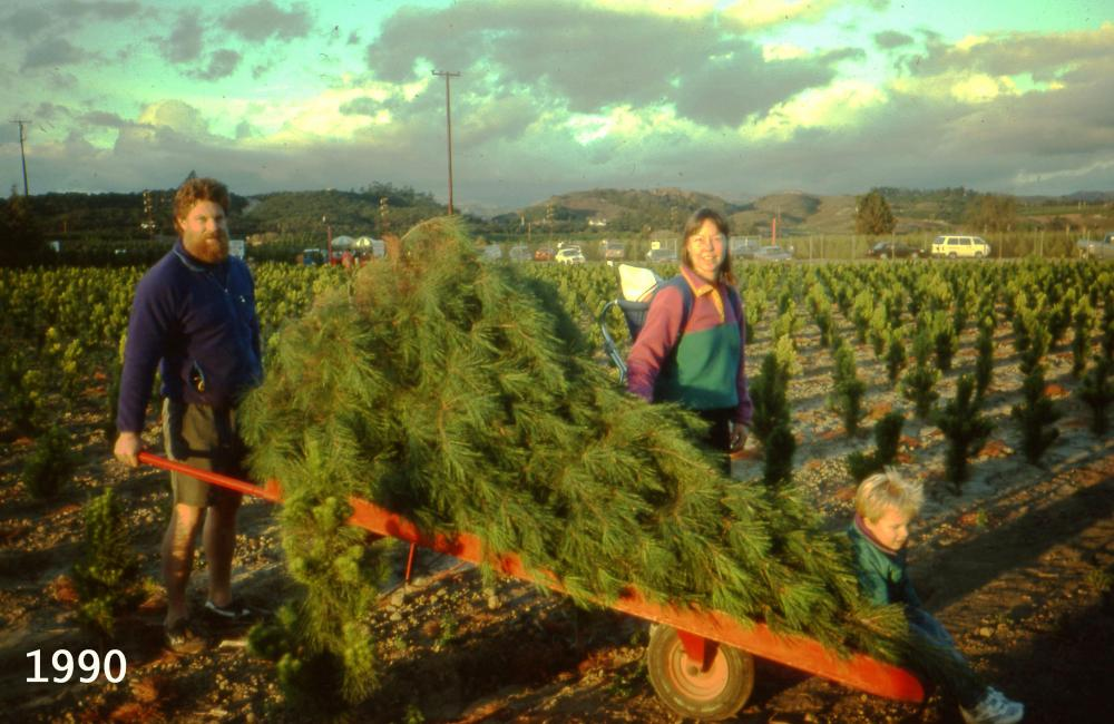 Tree Shopping In The 90's