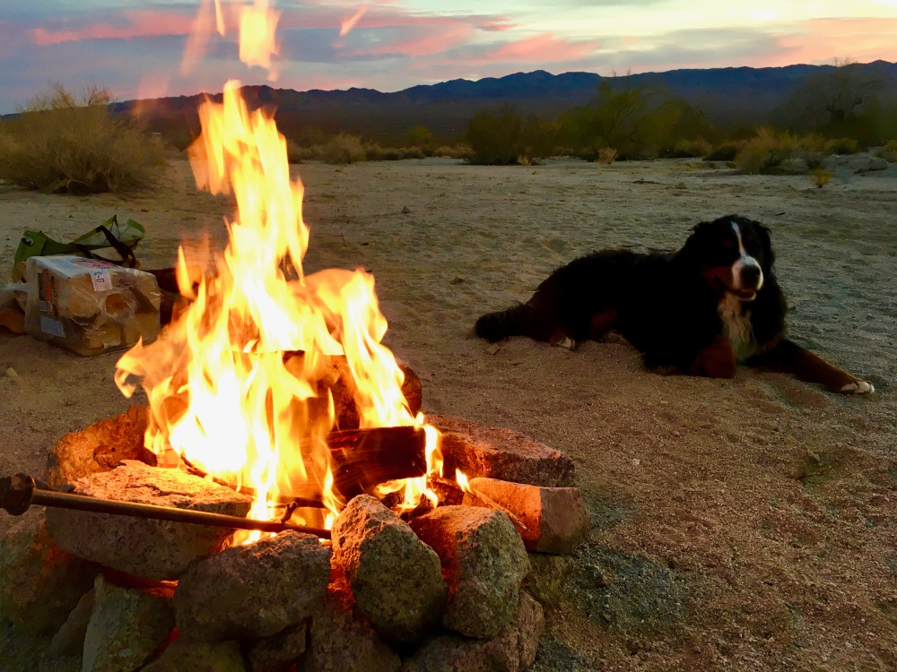 Tuks Enjoys The Evening Fire