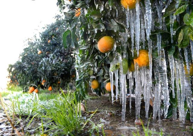 During A Freeze Farmers Protect Their Crops By Spraying Water On Them